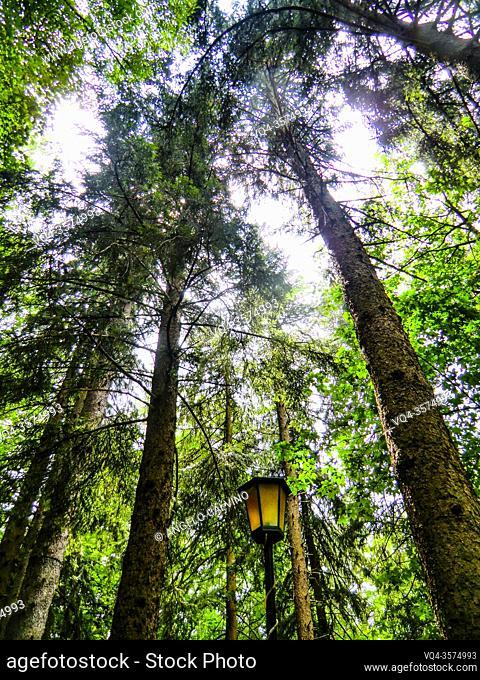 Forest that runs along the hamlet of Cutigliano, Pistoia, Abetone, Italy, Europe