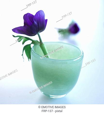 Blue anemone blossom in a light blue glass vase