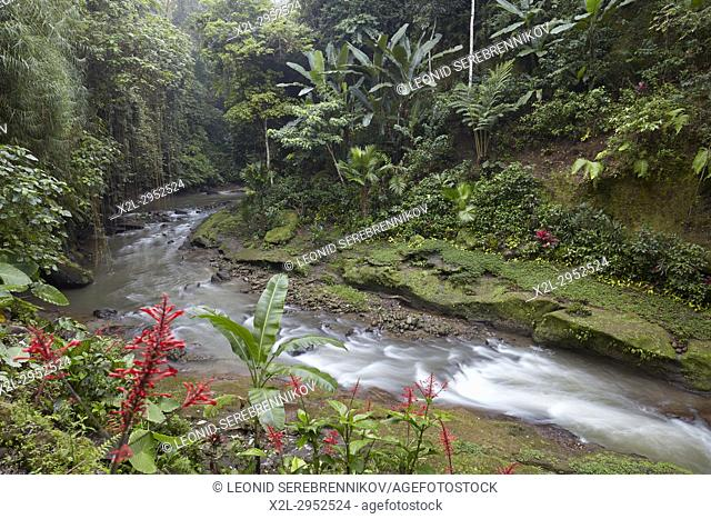 Small river running through rainforest near Hotel Tjampuhan Spa. Ubud, Bali, Indonesia
