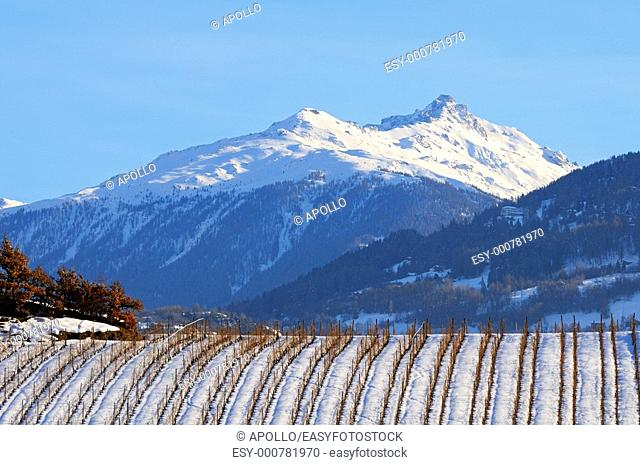 Vineyard during winter in front of the snow-covered mountains of the Pennine Alps, Valais, Switzerland