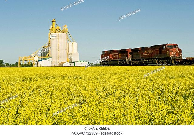 locomotives pass a canola field and inland grain terminal near Portage la Prairie, Manitoba, Canada