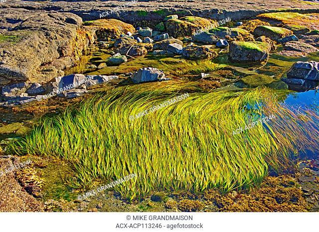 Tide pools at Botanical Beach, Juan de Fuca Provincial Park, British Columbia, Canada