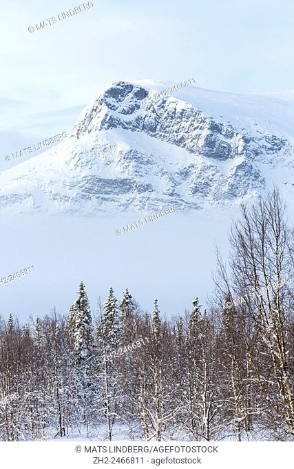 Winter landscape from Sarek national park with mountain and trees, birches and spruces in foreground and fog below the mountain, Swedish Lapland, Sweden