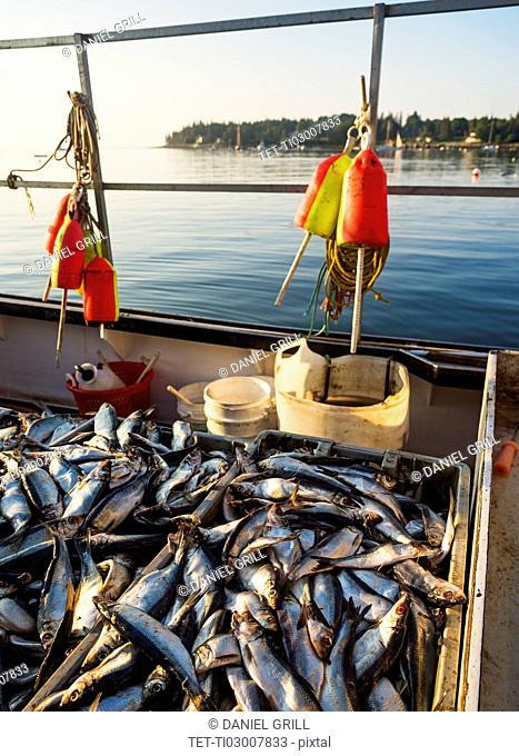Fresh fish in crates