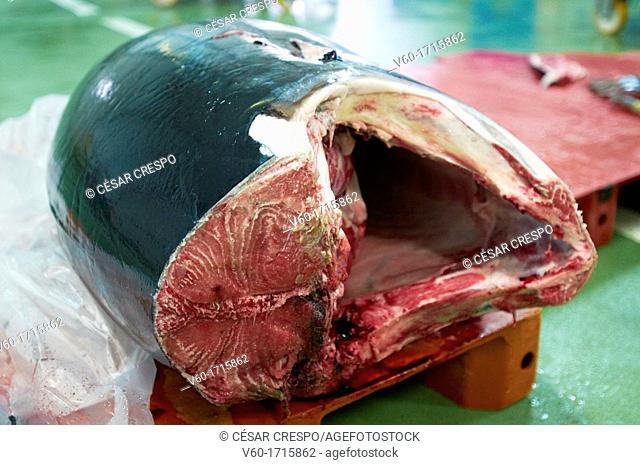-Tuna- Tuna Fish