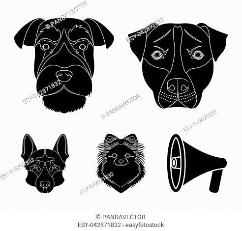 Muzzle of different breeds of dogs.Dog breed Stafford, Spitz, Risenschnauzer, German Shepherd set collection icons in black style vector symbol stock...