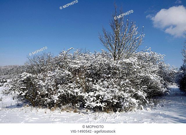 Germany / GERMANY, WESTHAUSEN, 24.03.2008, Winterstimmung - Winter mood, Lauchheim, Ostalbkreis, Baden-Württemberg, Germany, Germany - Westhausen