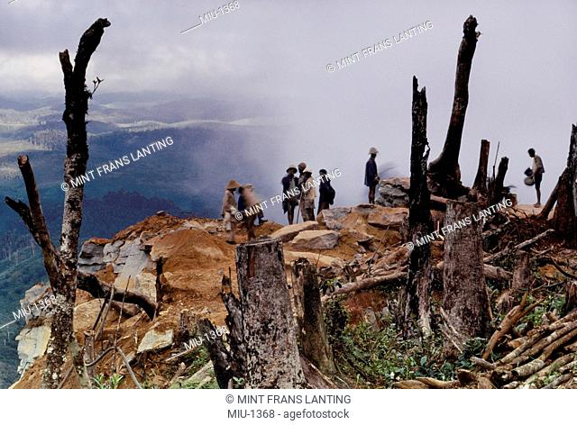 Loggers at clearcut, an area of forest which has been cleared, Eastern Madagascar