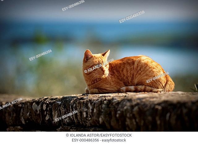 Cat resting in the sun in winter  Dalí Wall home, Port Lligat, Costa Brava, Spain