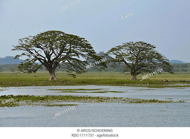 See, Tissamaharama, Sri Lanka