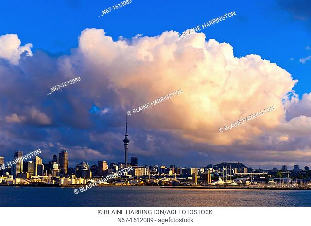 Skyline of Auckland featuring the Sky Tower the tallest free-standing structure in the Southern Hemisphere, Auckland, New Zealand