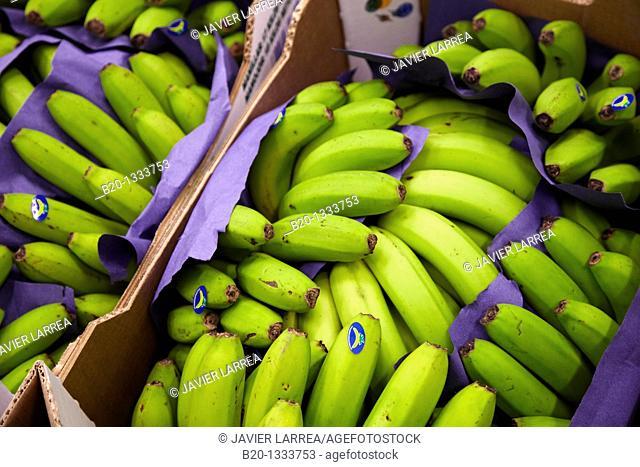 Bananas, Mercabilbao fruits and vegetables wholesale market, Basauri, Bilbao, Bizkaia, Euskadi, Spain