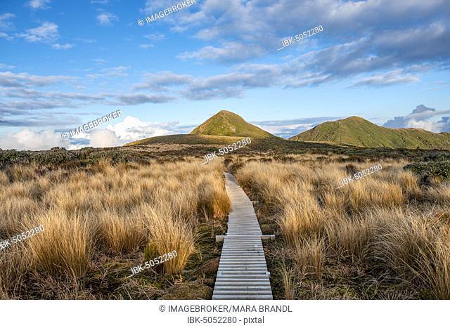 Hiking trail through grassland, Maude Peak and Henry Peak at the back, Pouakai Circuit, Egmont National Park, Taranaki, North Island, New Zealand, Oceania