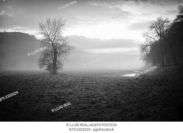 Sunrise on the bank of the river Wharfe in Grassington a winter morning in a foggy day. North Yorkshire, Yorkshire Dales, England, UK, Europe
