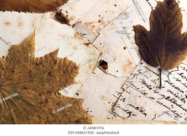 Still life. Top view of old paper with dry leaves. Recipe. Czech language. Translation (top paper) baking powder (right paper) flour, until is