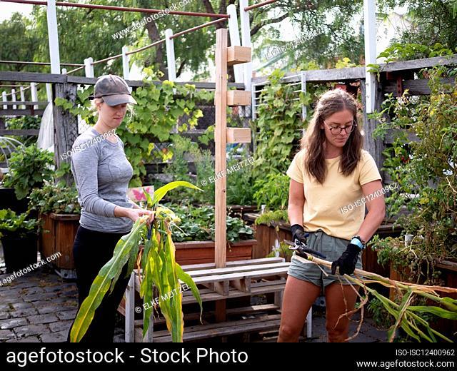 Australia, Melbourne, Two women working at community garden