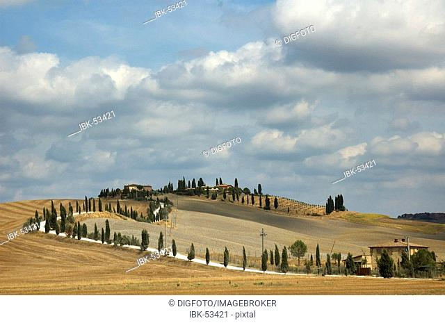 Road on a hill, lined with cypresses, Val d'Orcia, Tuscany, Italy