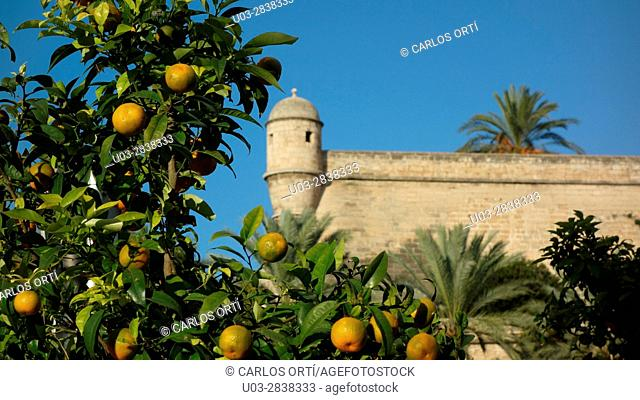 Old wall surrounding the majorca capital city of Palma de Majorca. Dating from the Middle Age, are still preserved
