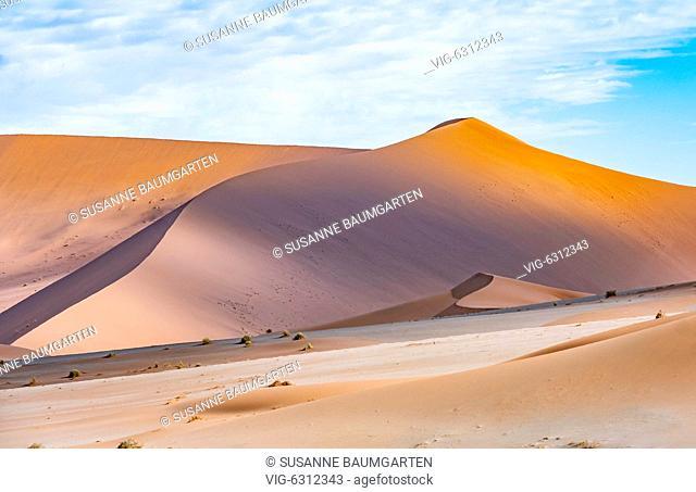 NAMIBIA, SOSSUSVLEI, Star dunes. - SOSSUSVLEI, NAMIB, Namibia, 07/01/2018