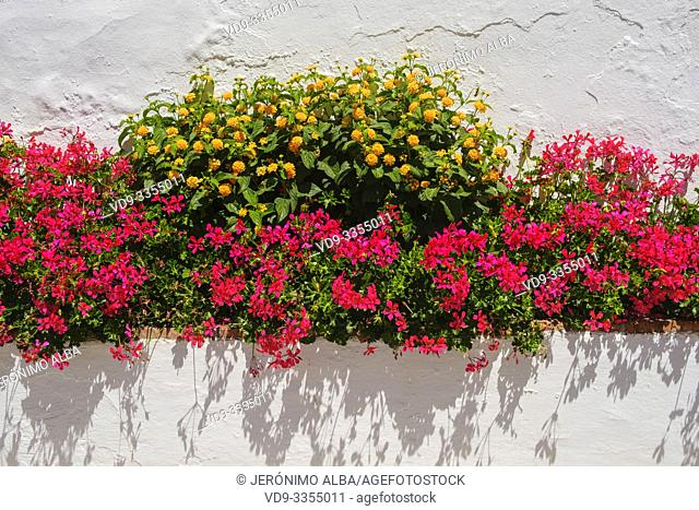 Flowers on a white wall, white village of Mijas. Malaga province Costa del Sol. Andalusia, Southern Spain Europe