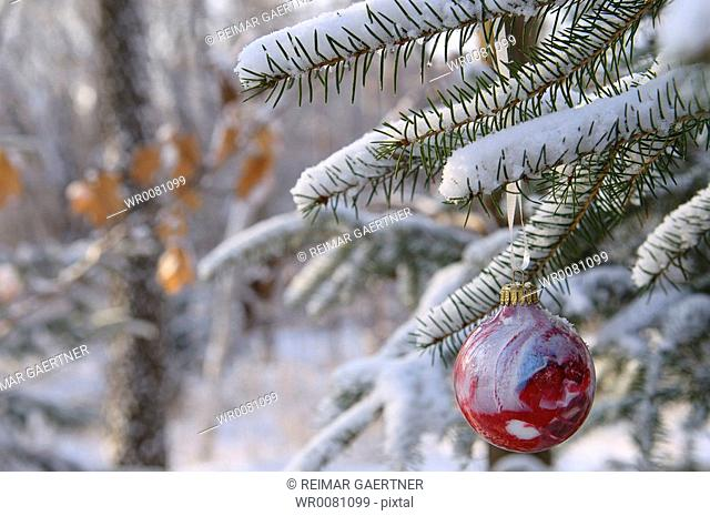 Red glass ball Christmas tree ornament on snow covered evergreen