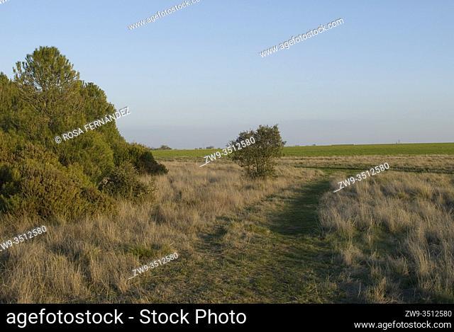 Grassland near Puebla de Beleña, at Uceda country, province of Guadalajara, Castilla La Mancha, Spain
