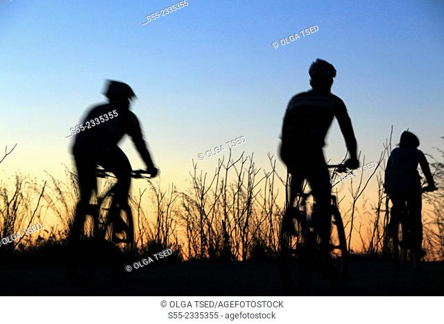 Cyclists riding in the sunset. Passeig de les Aigües; Collserola mountain, Barcelona, Catalonia, Spain