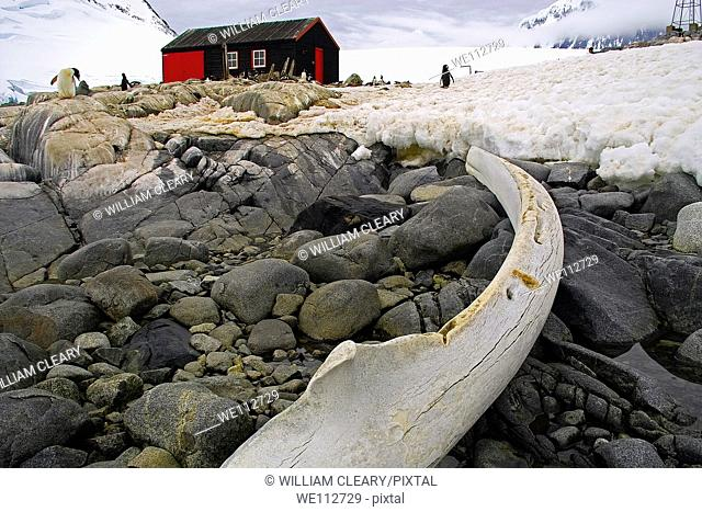Whale bone deposited by the sea at Port Lockroy station, Antarctica