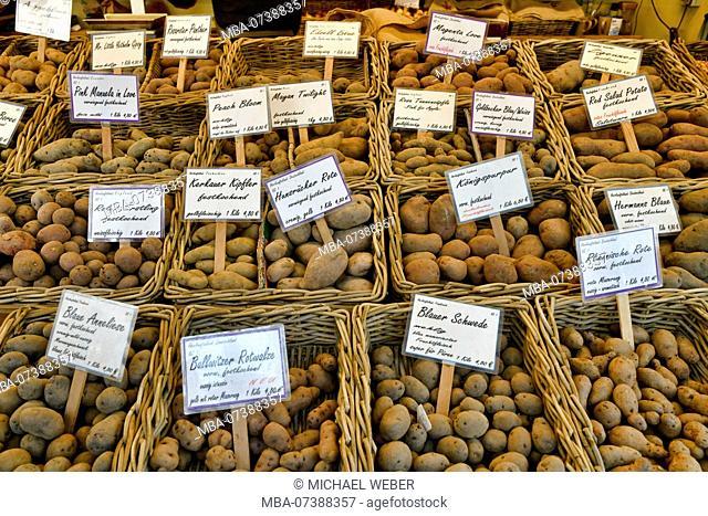 Various types of potatoes, market at Carlsplatz, weekly market, Dusseldorf, North Rhine-Westphalia, Germany
