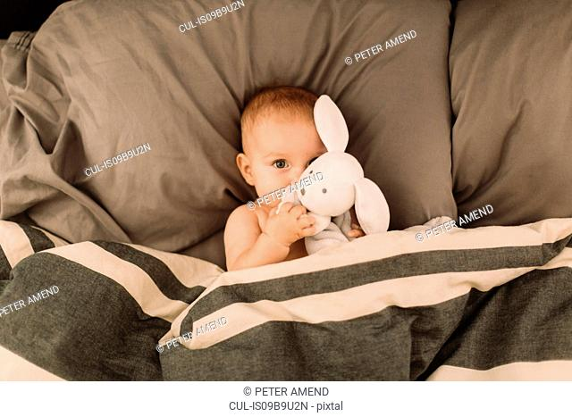 Portrait of baby girl lying in bed hugging toy rabbit, overhead view