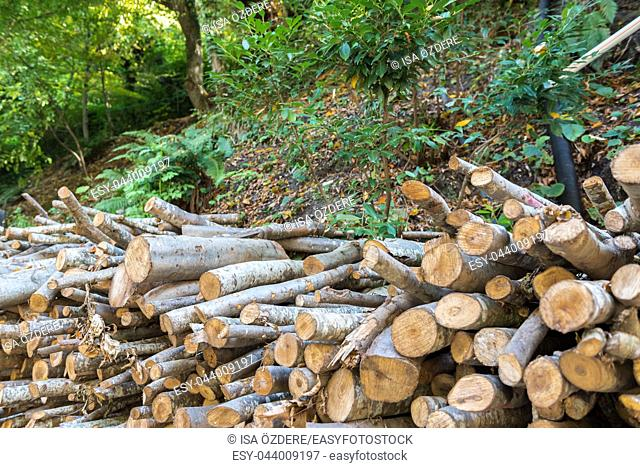 Heap of wood logs ready for winter. Stack of chopped firewood.