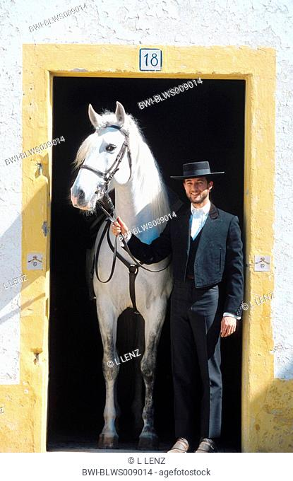 Lusitanian horse Equus przewalskii f. caballus, stallion and horseman in the stable entrance, Portugal