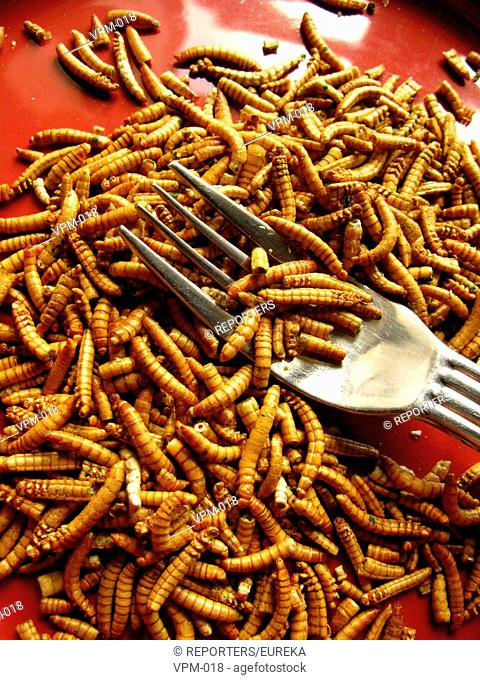 Consumption of insects as snacks;Insectes comestibles;eetbare insekten;edible insects Reporters / EUREKA