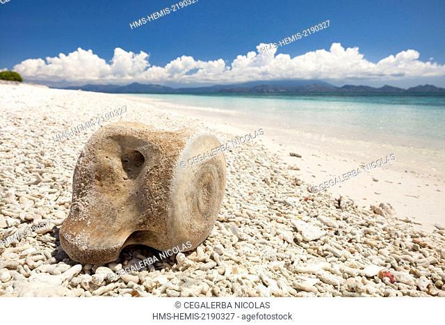 Indonesia, Lesser Sunda Islands, Alor archipelago, Kangge Island, Whale bone on a beach