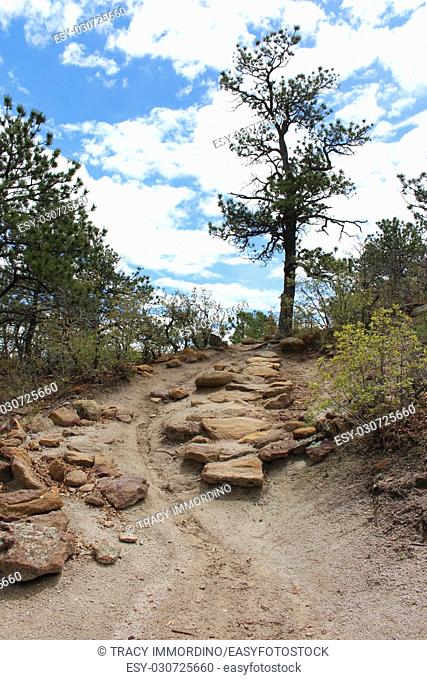 A dirt hiking trail, strewn with rocks, edged with vegetation, on the uphill ascent at Palmer Park in Colorado Springs, Colorado, USA