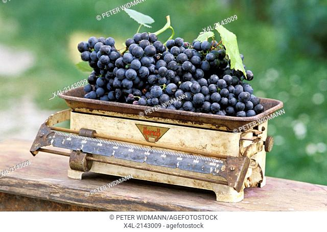 blue grapes on kitchen scales