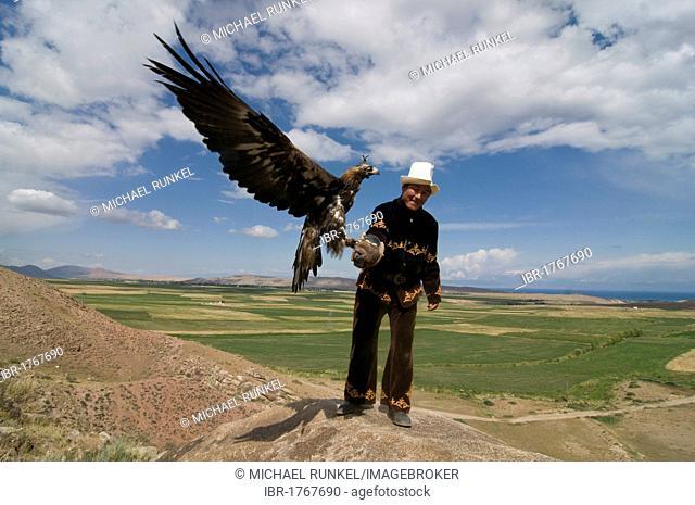 Eagle, raptor hunter, Issy Koel, Kyrgyzstan