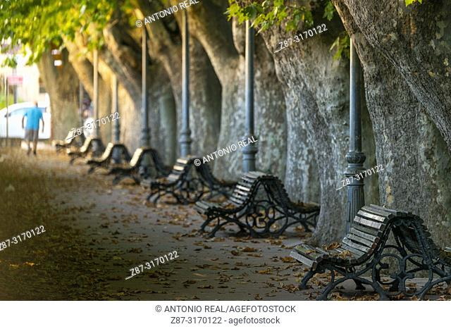Plane trees and benches along avenue in Riopar, Albacete province, Spain
