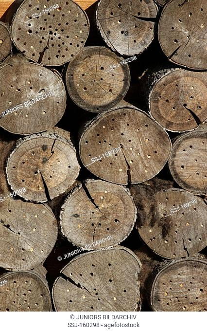 Insect hotel - tree trunks