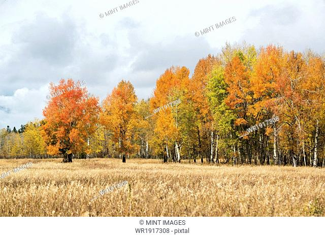 Autumn foliage on trees in an open landscape