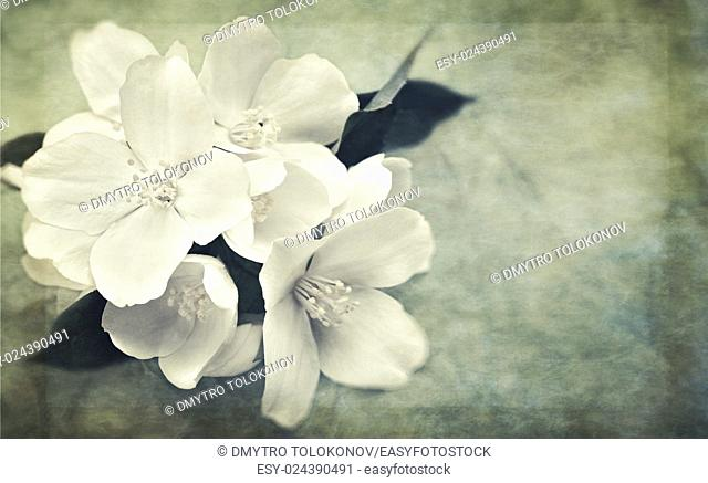 Oriental grungy backgrounds with jasmine flowers and vintage paper texture