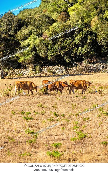 Es Migjorn Gran Municipality. Minorca Island. Balearic Islands. Spain