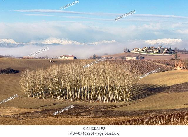 Monferrato, Asti district, Piedmont, Italy. Monferrato wine region