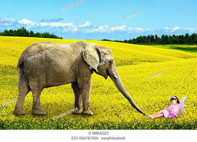 African elephant with fairy in yellow canola flower field