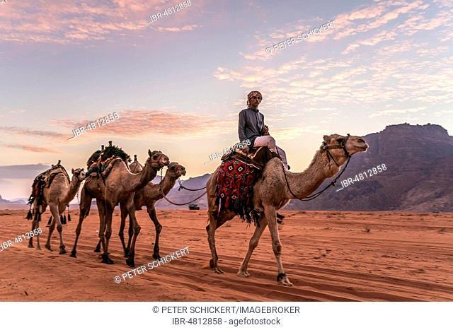 Bedouin with camels in the desert Wadi Rum, Jordan
