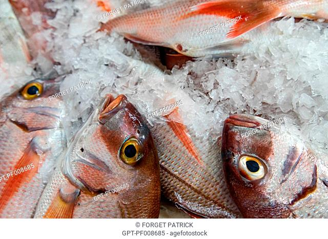 GILTHEAD SEABREAMS, FISH MARKET, MERCADO LAVRADORES, FUNCHAL, FUNCHAL, MADEIRA, PORTUGAL
