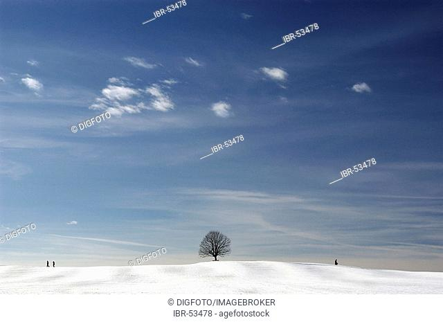 Solitary tree and walkers under blue sky in a winter scenery, Bavaria, Germany