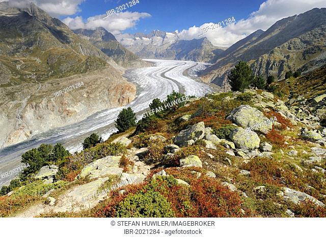 Large Aletsch Glacier, UNESCO World Natural Heritage Site, Jungfrau-Aletsch-Bietschhorn region, Goms, Valais, Switzerland, Europe