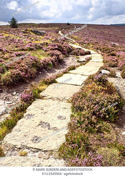 Stone Flagged Footpath across Heather Moorland in the Simonside Hills near Rothbury Northumberland England