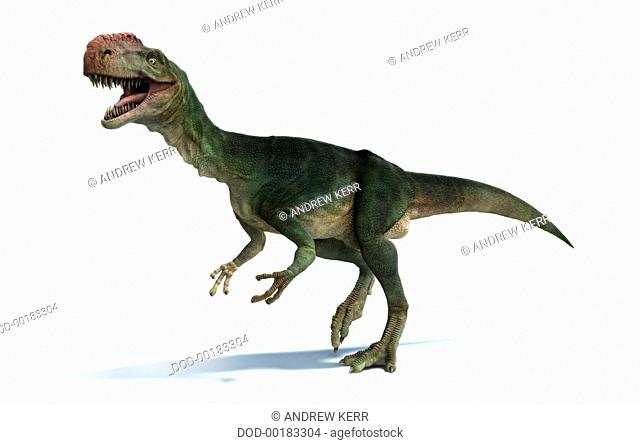 Monolophosaurus. Jurassic vertebrates, Monolophosaurus, this predatory dinosaur had a very thick and knobbly crest on its head